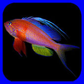 Fishes: Greater Caribbean app