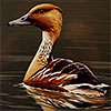 Artistic License: The Duck Stamp Story