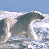 Forces of Change: The Arctic: A Friend Acting Strangely
