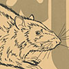 The Rat: Man's Invited Affliction