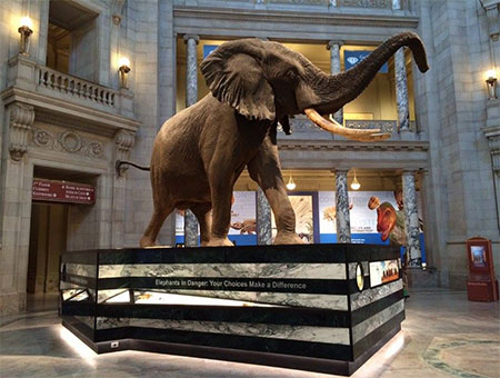 The Culture And Evolution Of Natural History Museums