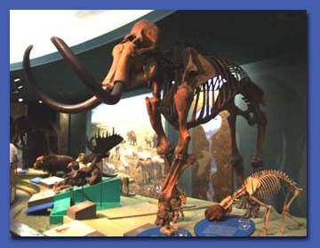 Ice Age: Ice Age Mammals and the Emergence of Man