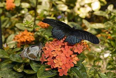 Butterflies + Plants: Partners In Evolution