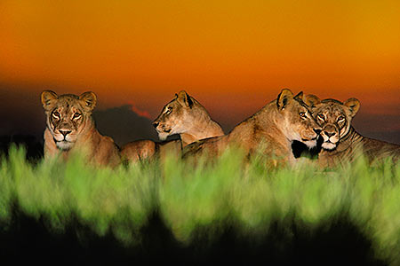 National Geographic Into Africa The Photography Of Frans