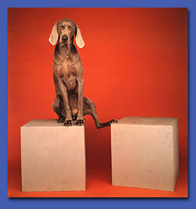William Wegman -- Funny/Strange