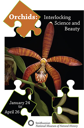 Orchids: Interlocking Science and Beauty