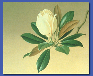 A Passion For Plants Botanical Art From The Shirley