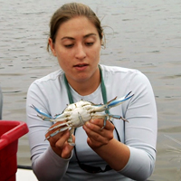 Smithsonian scientist tags a Maryland bllue crab