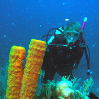 Smithsonian scientist conducts underwater rsearch