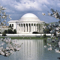 Jefferson Memorial Blossoms by Jeff Tinsley