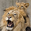 sample image linking to National Zoo website