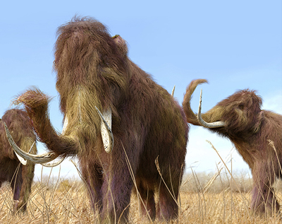 De-Extinction: A Mammoth Undertaking: Can Ancient DNA Re-create Lost Species? | Monday, May 4, 6:45 p.m.
