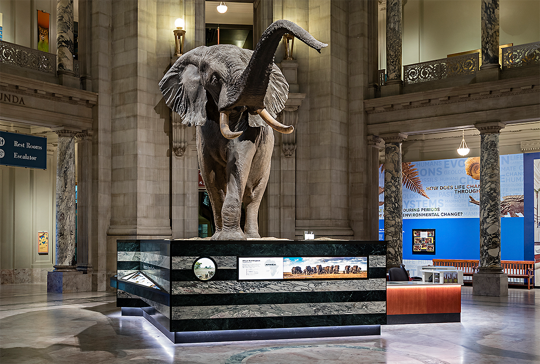 images for National Museum of Natural History