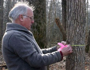 Smithsonian forest ecologist Geoffrey Parker began his tree censuses his first day on the job, Sept. 8, 1987. Here he measures a tree on the grounds of the Smithsonian Environmental Research Center. (Photo by Kirsten Bauer)