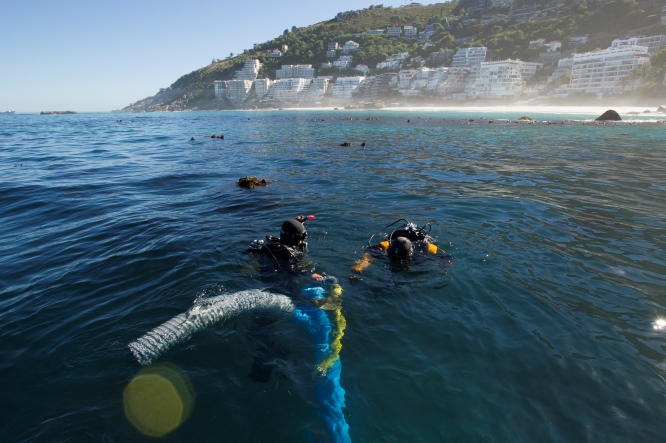Scuba divers swimming at the surface of a sea near land