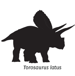 Torosauris