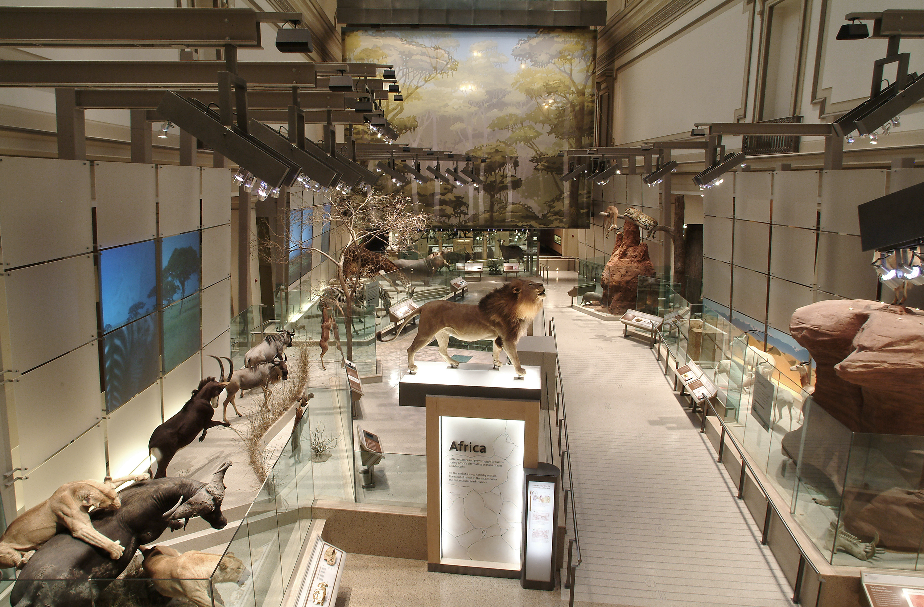 Foyer Museum Utah : Aerial view of the mammal hall smithsonian institution