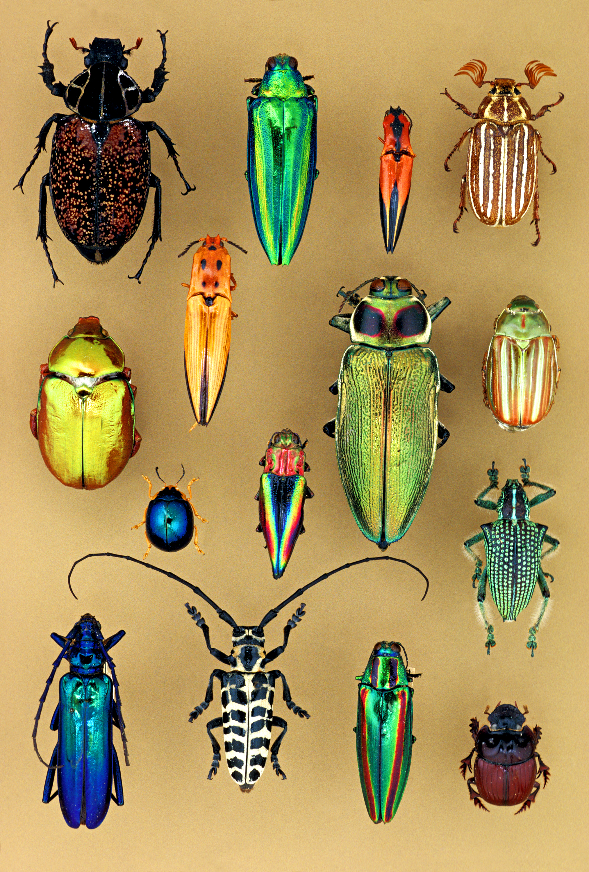 objects of wonder  coleoptera