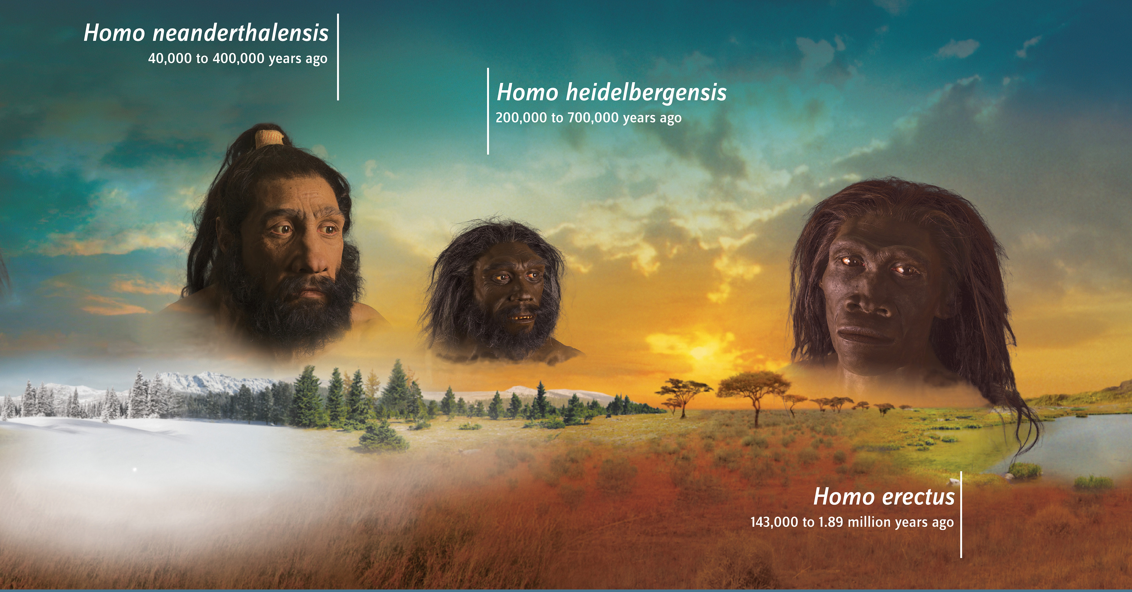 Human Origins Traveling Exhibition  Banner  bd4c4c40cf3