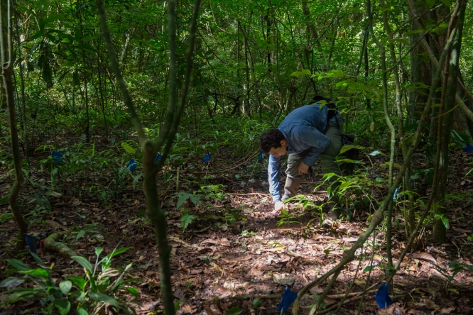 Tropical Forest Seeds Use Three Strategies To Survive and