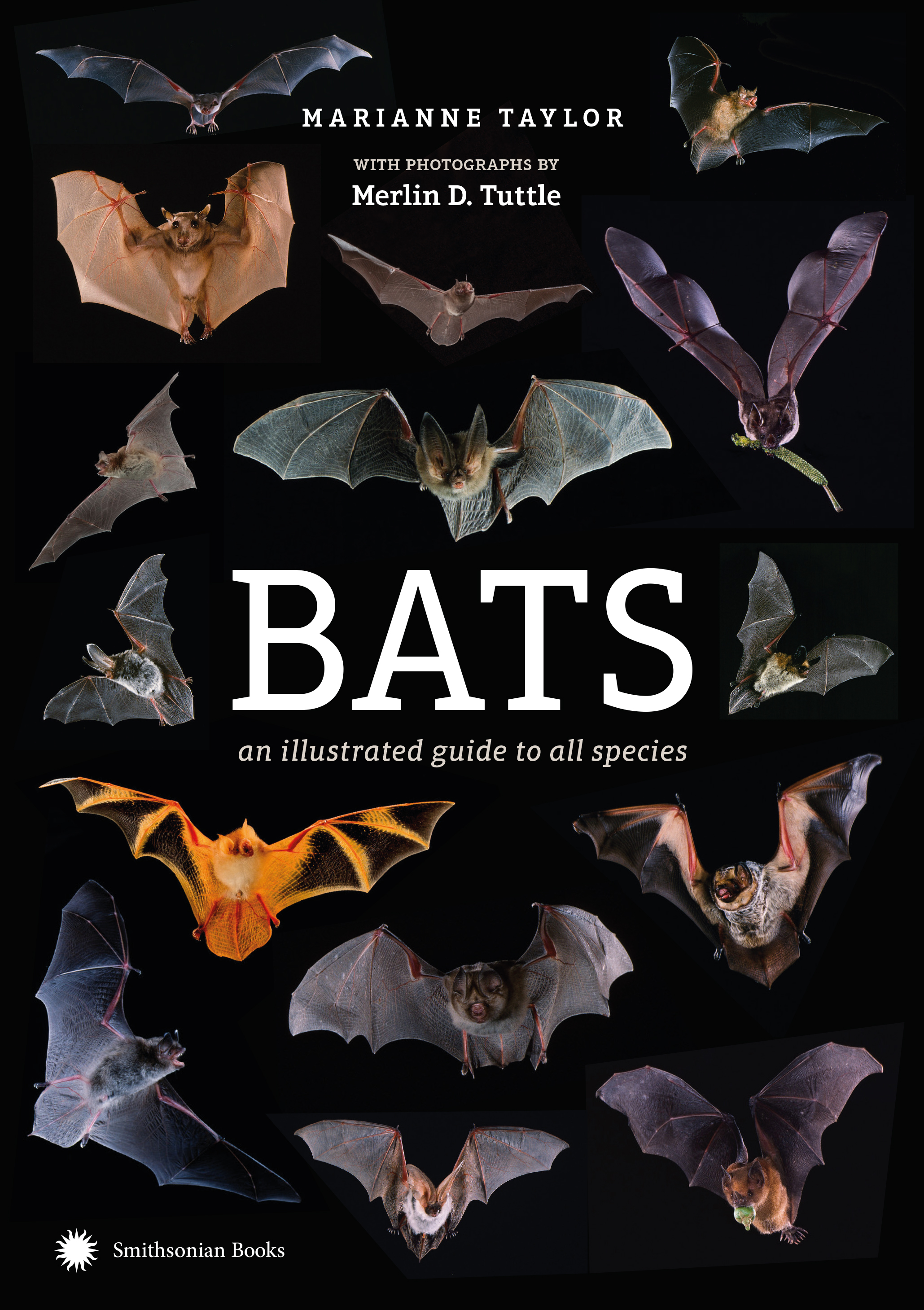 Bats book cover