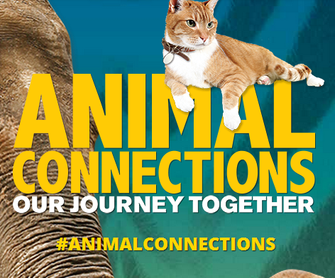 Animal Connections