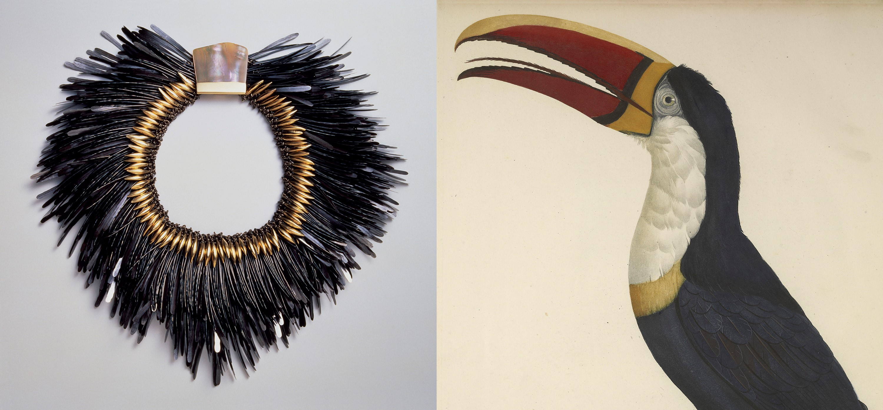 Composite photo of bird and feathers