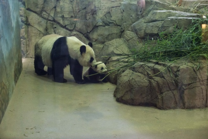 Bao Bao and Mei Xiang