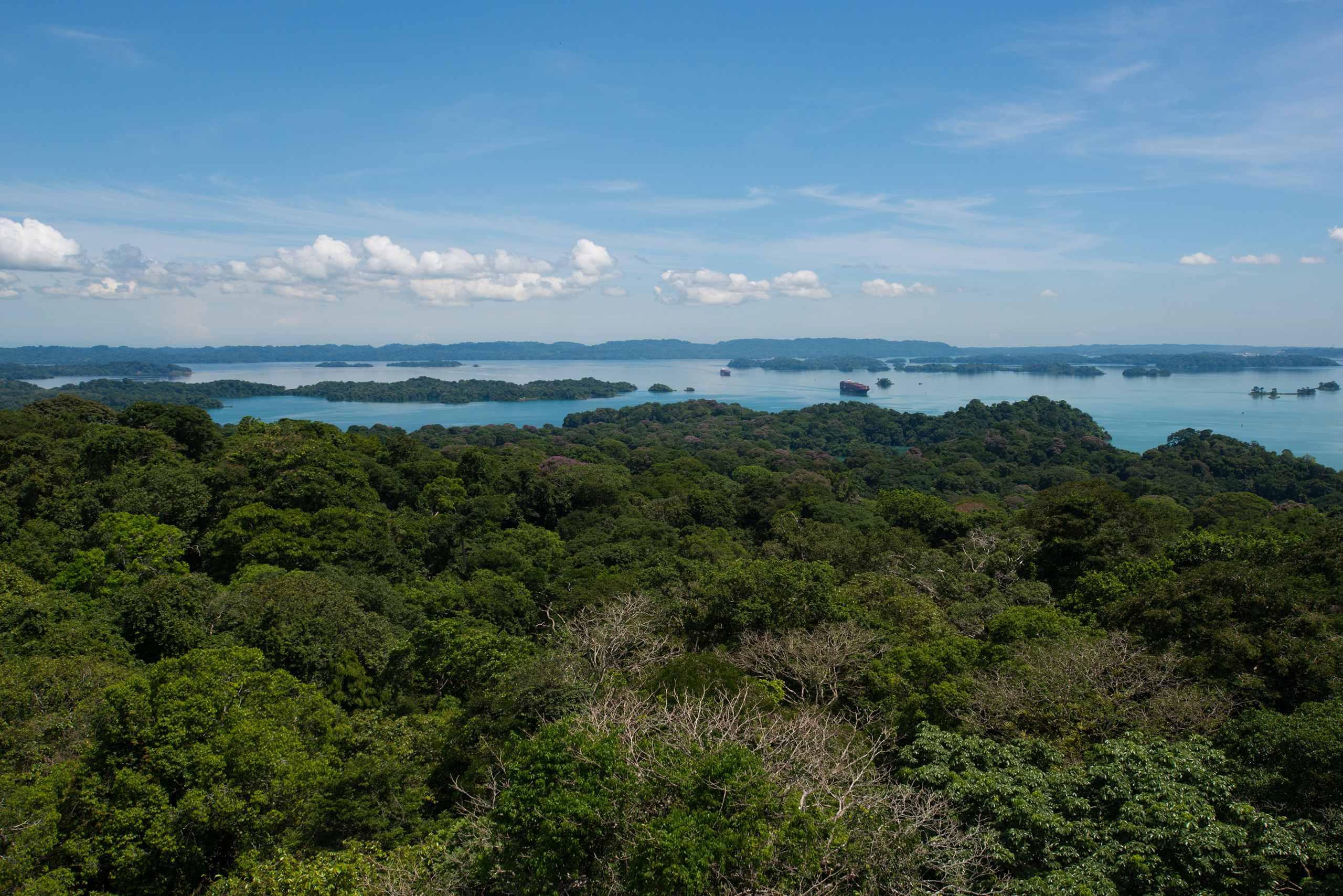 Aerial view of forest at Barro Colorado Island