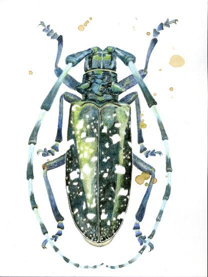 Stylized drawing of beetle