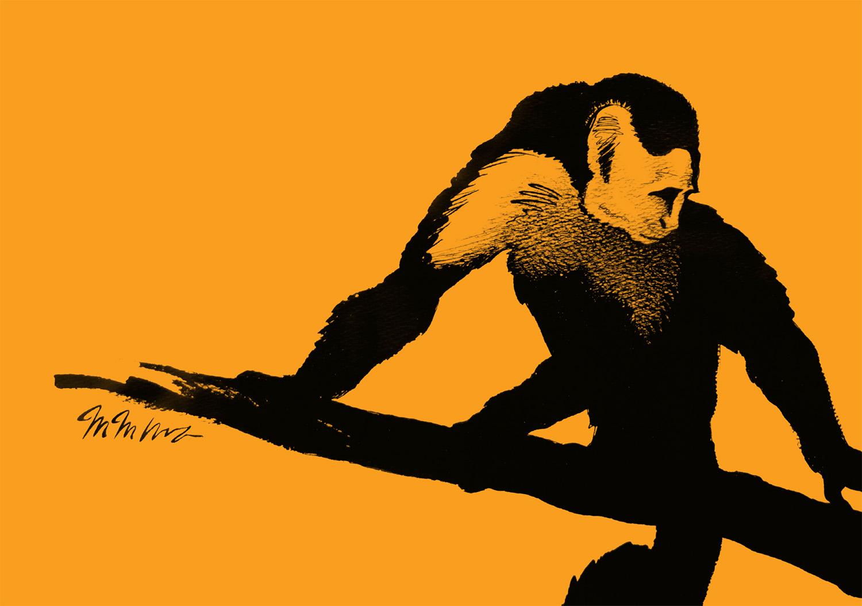 ink drawing of capuchin monkey