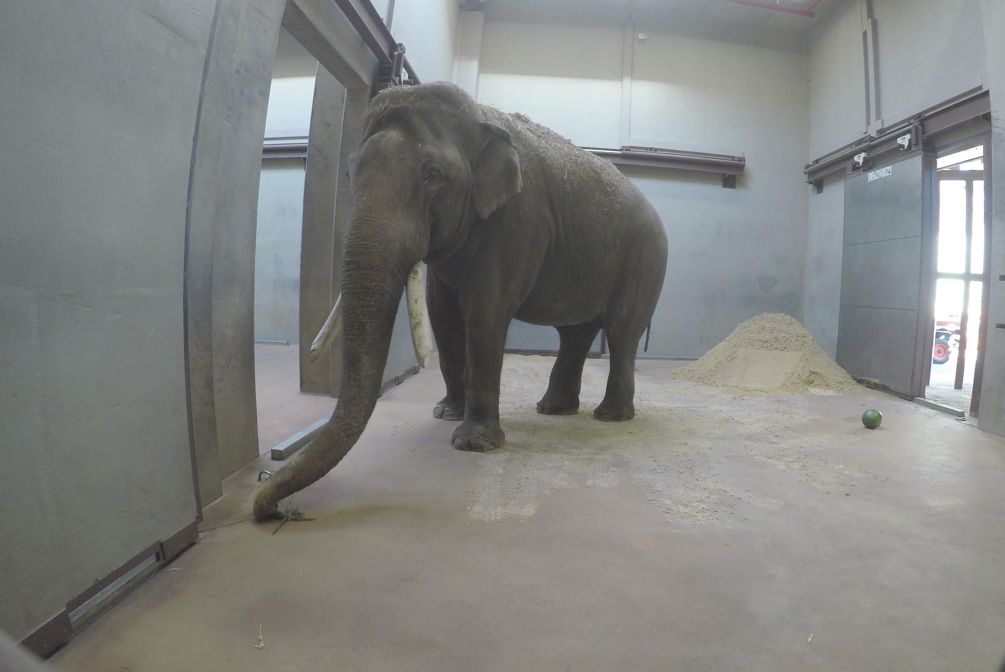 Spike the elephant in barn