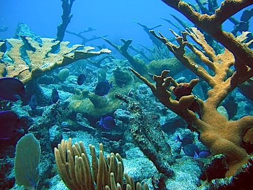 Underwater photo of healthy corals