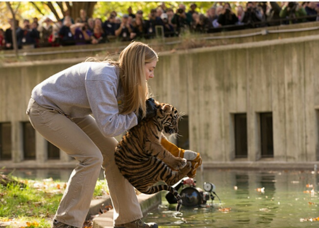 tiger cub swim test