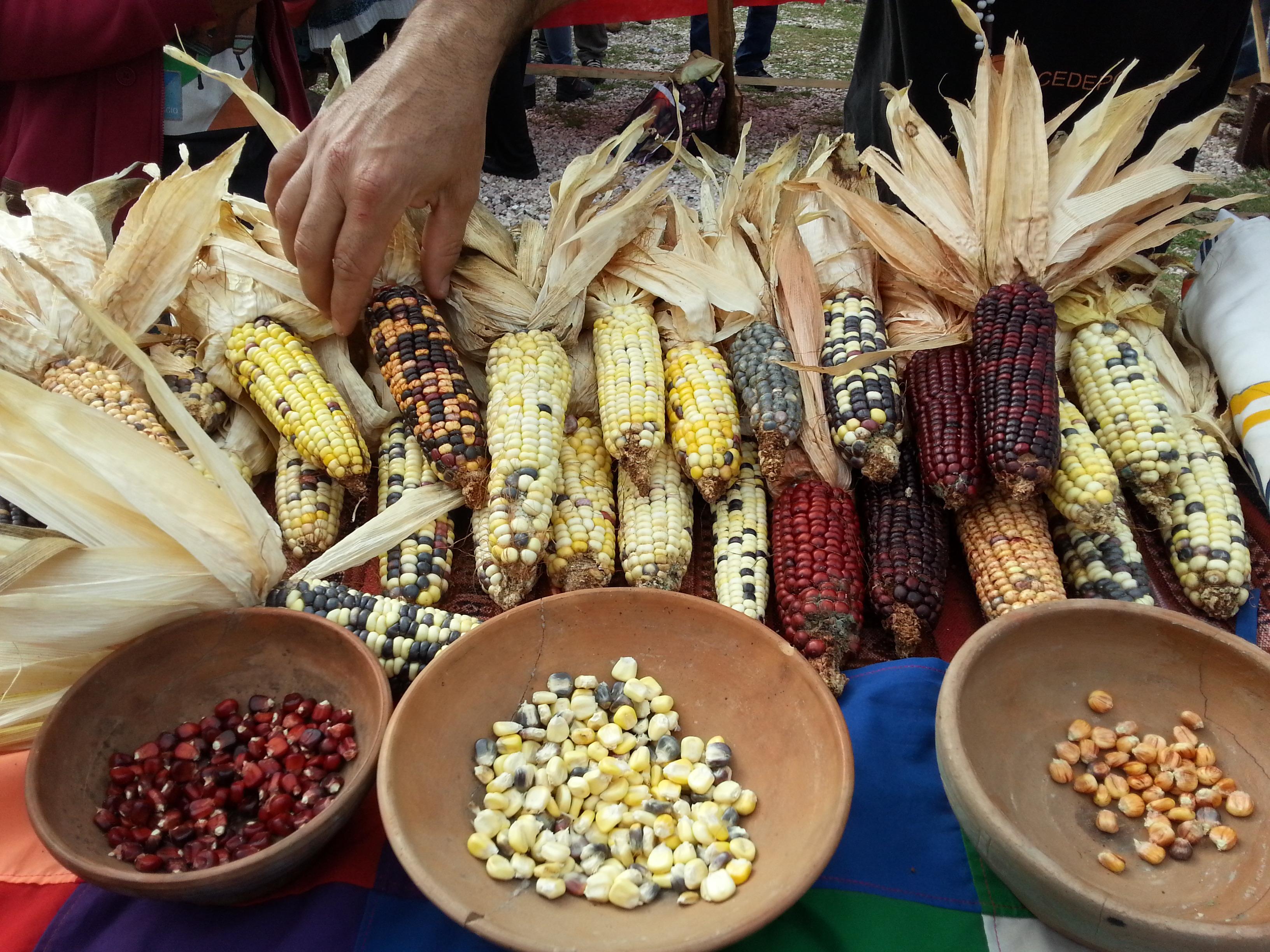 Corn on table