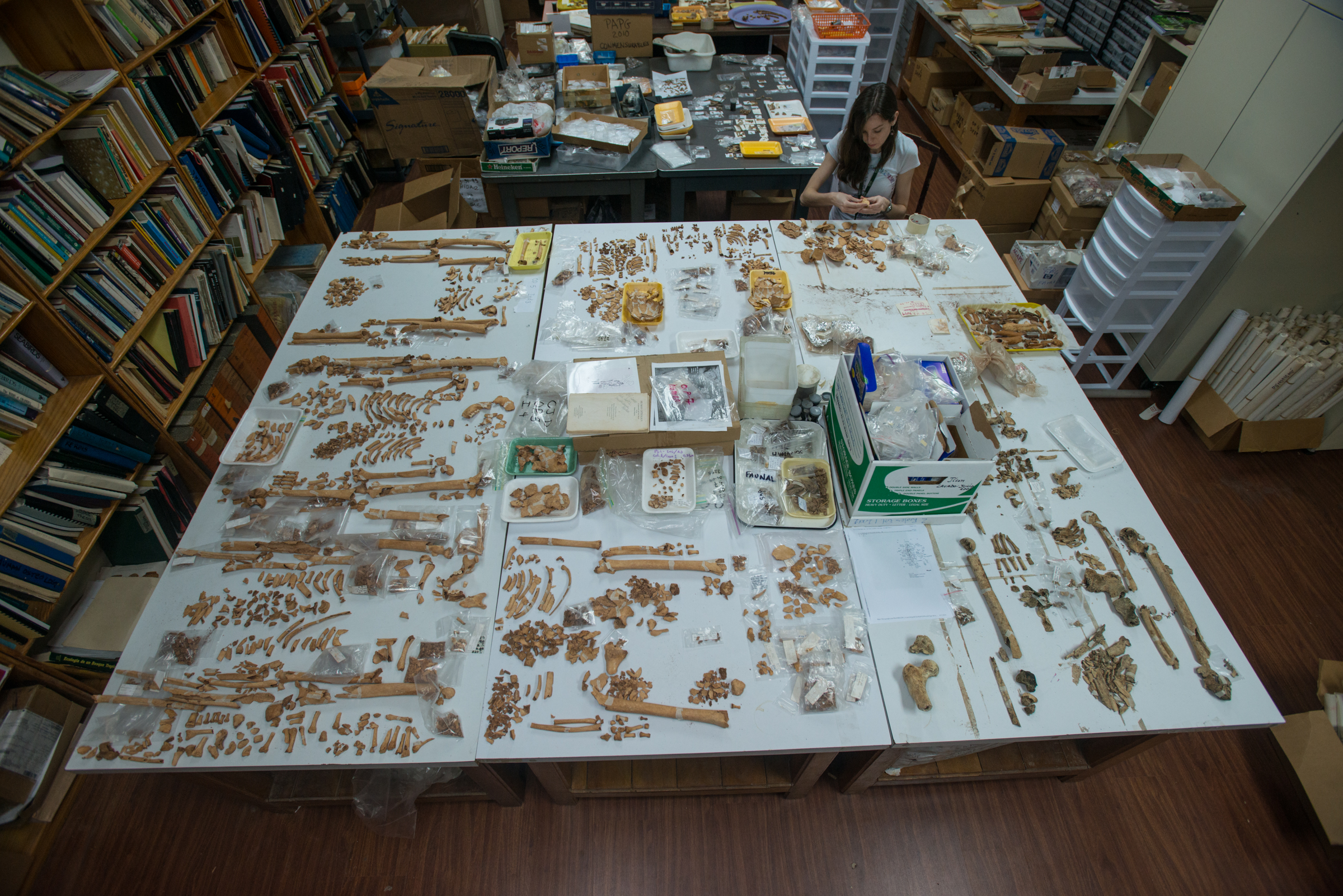 Lab with table covered with bones