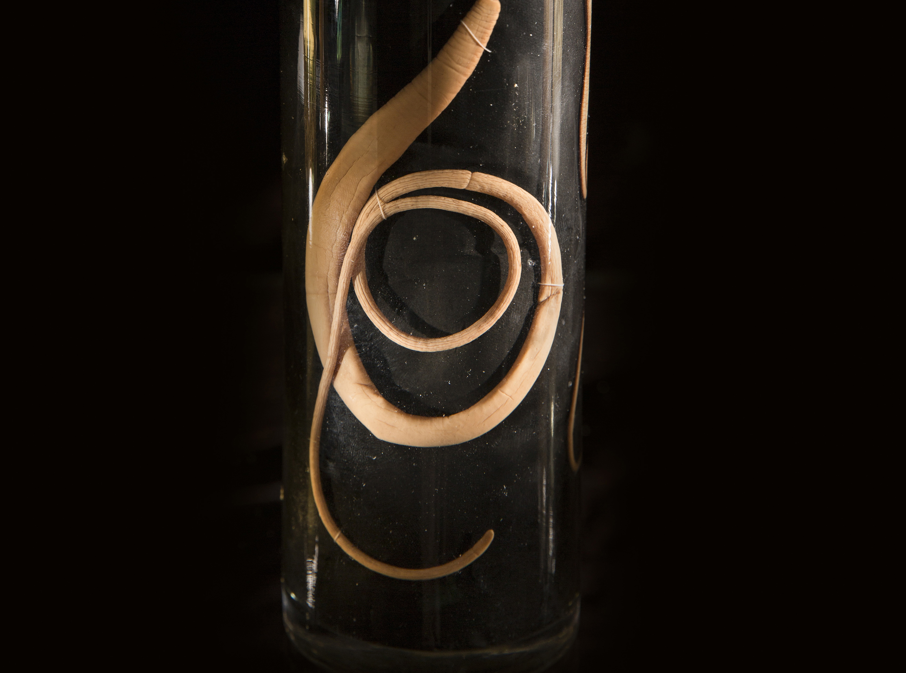 cropped photo of worm in specimen jar