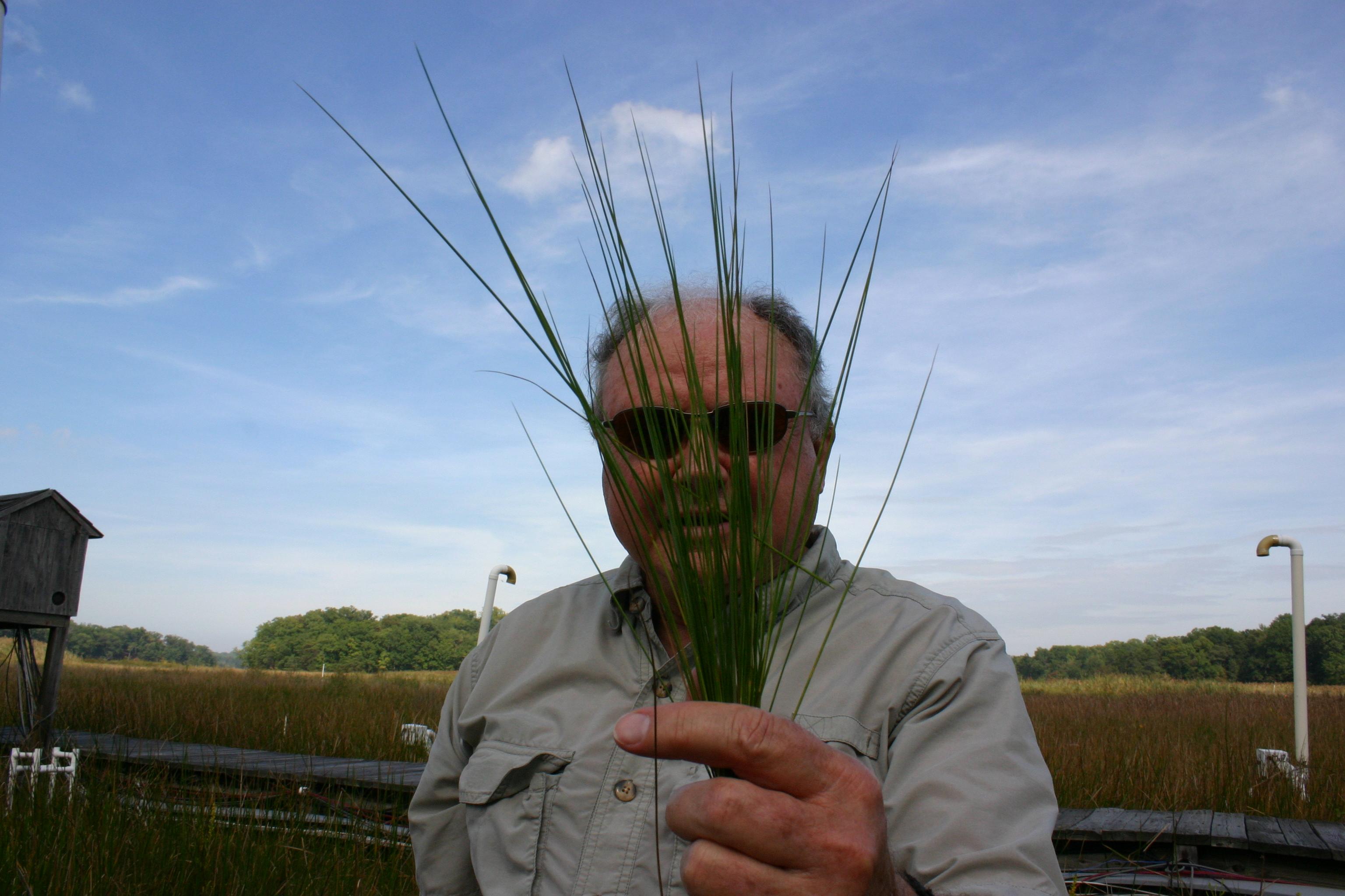 man holding marsh grass