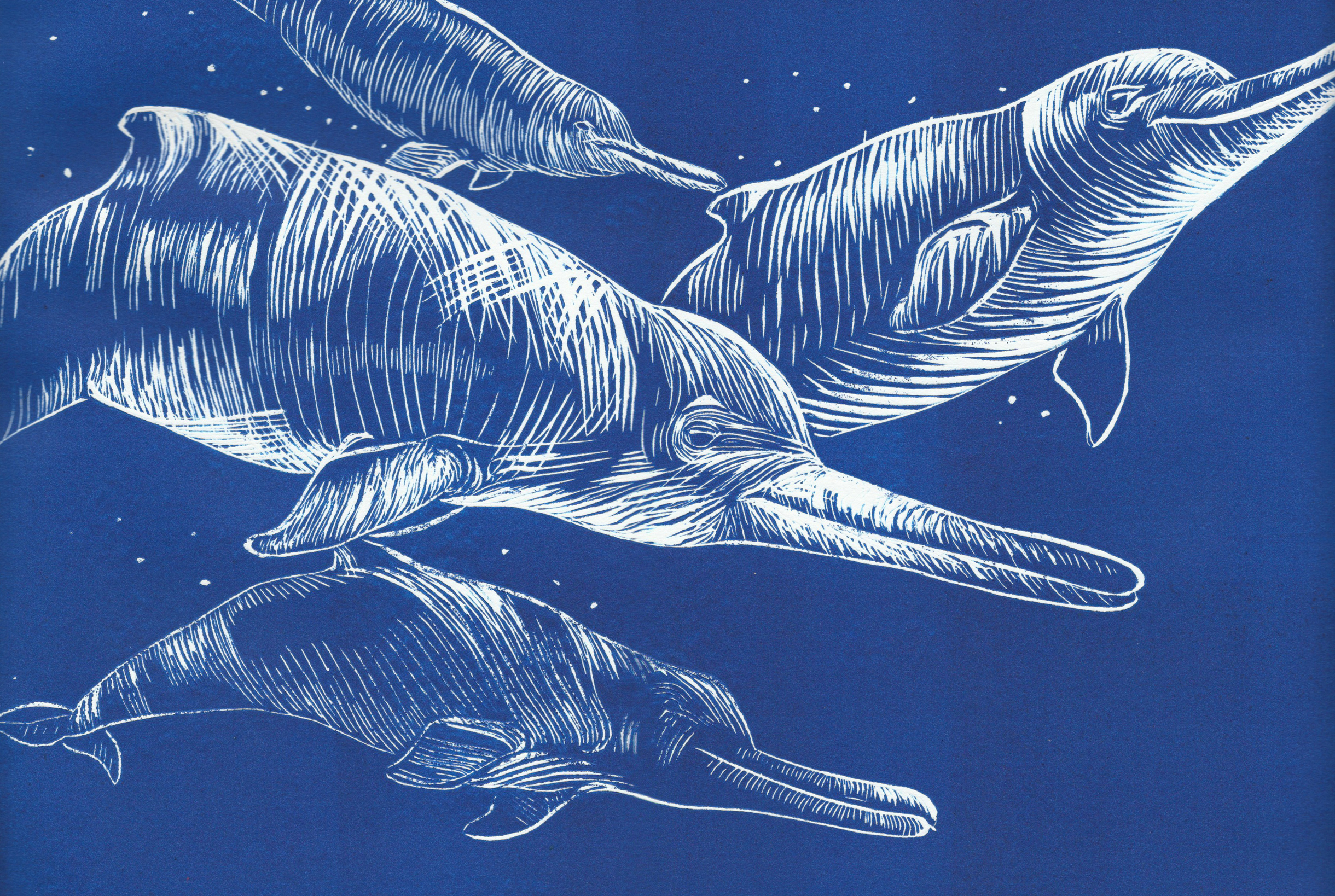 Close up of artists rendering of dolphins