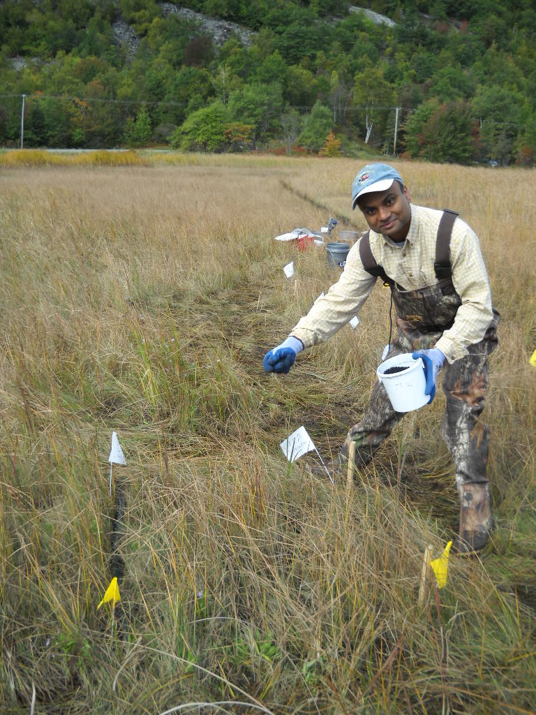 man spreading carbon pellets onto marsh to remediate methylmercury