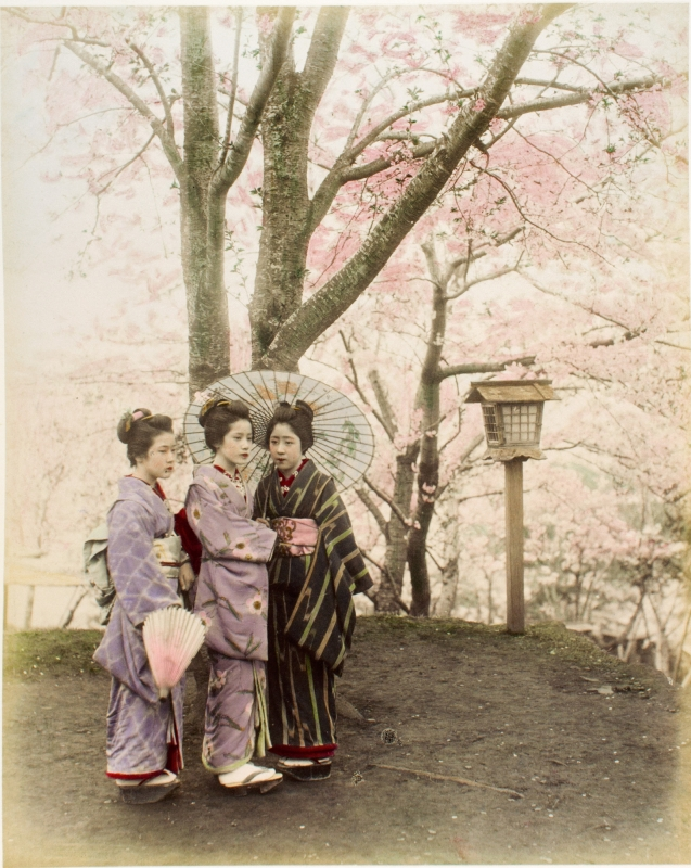 tinted portrait of Japanese women in kimonos among cherry blossoms