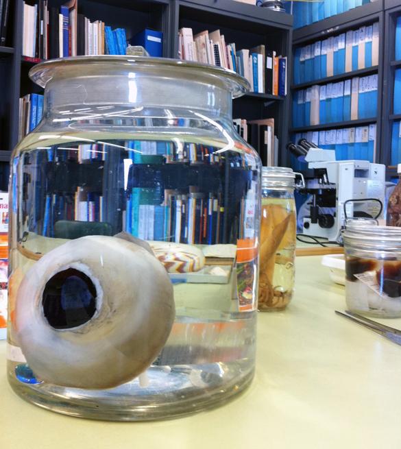 Giant Squid Eye, 2008