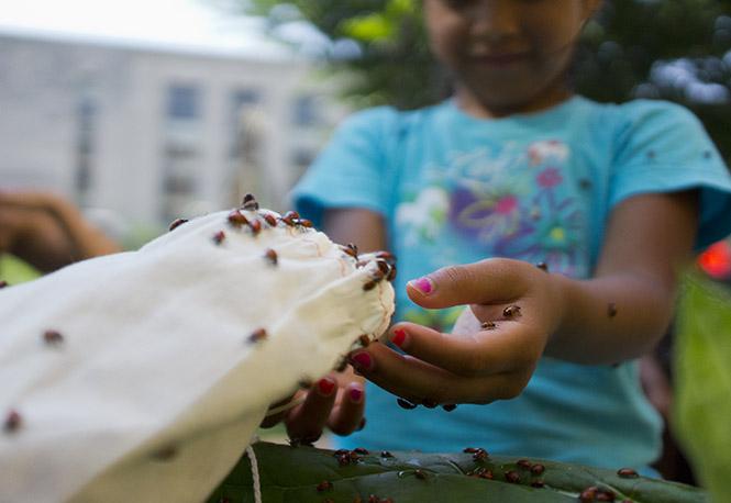 Ladybugs on girl's hands