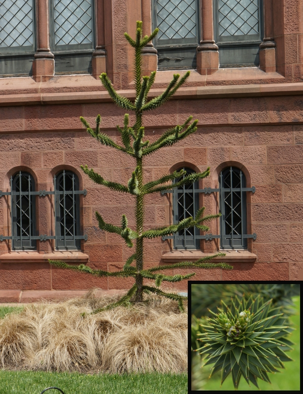 tree outside the Castle