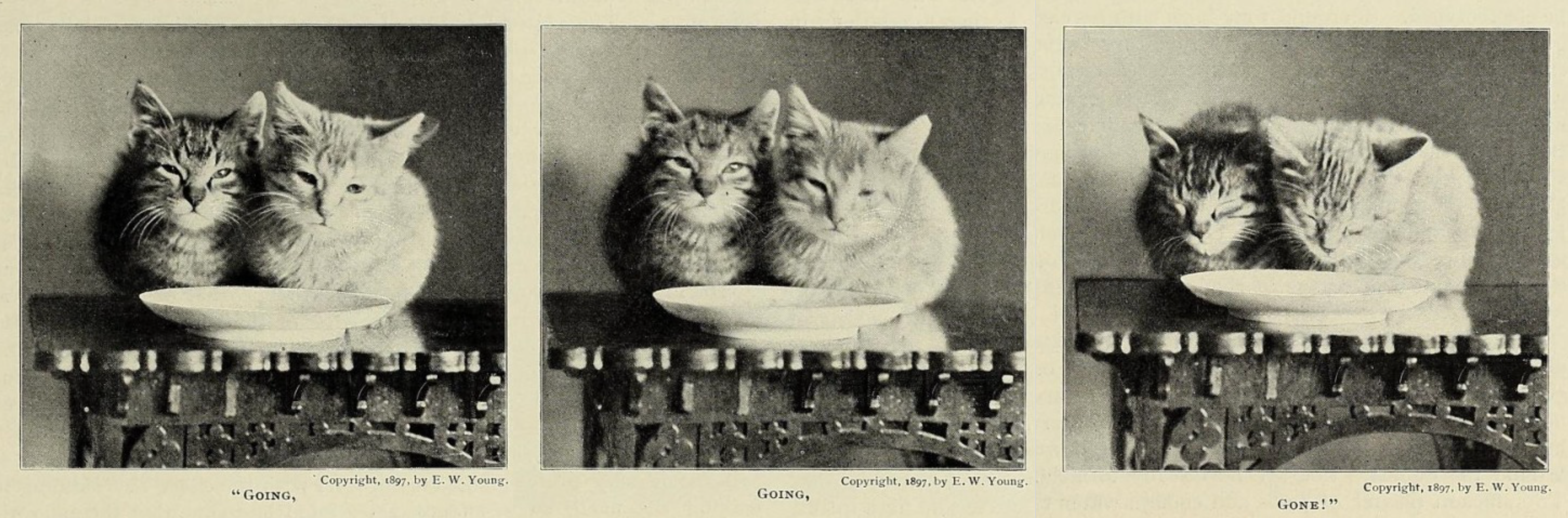 3 pictures of sleeping cats saying going going gone