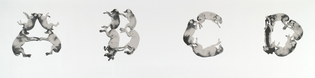 dogs grouped into letters