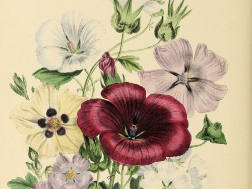 Illustration of red, white and purple flowers.