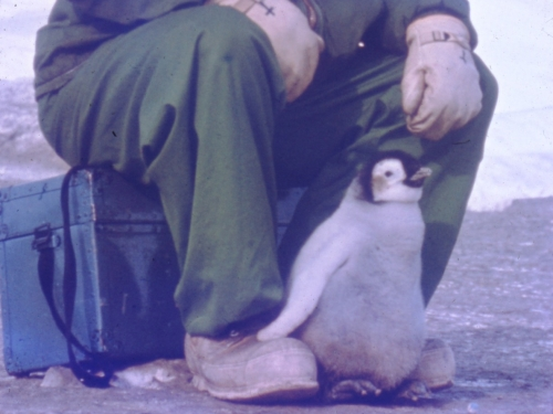 Small penguin standing between the feet of a man. He is sitting on a trunk, and wears a green snowsuit with a hood and gloves.