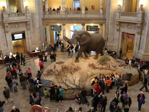 Visitors in Rotunda, Natural History Museum