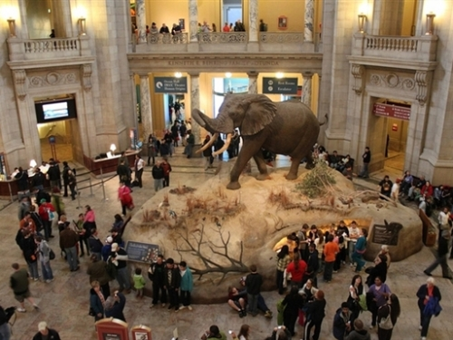 Visitors in Rotunda, Natural History Museum